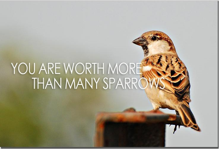 ValueSparrow